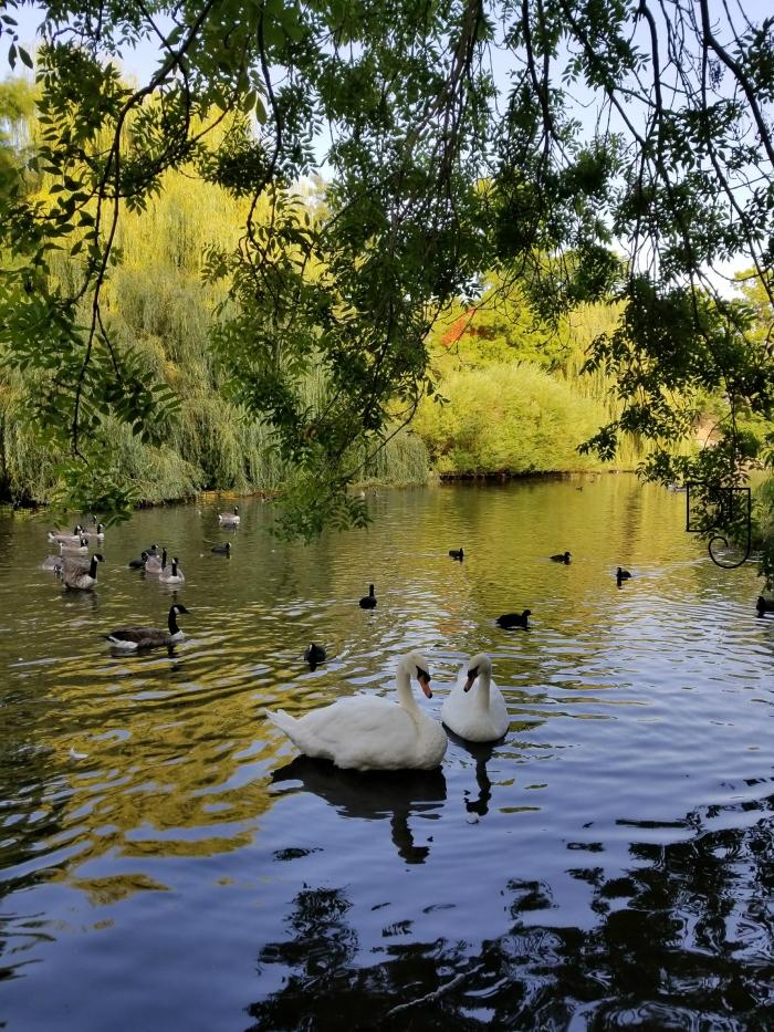 swans-dtj