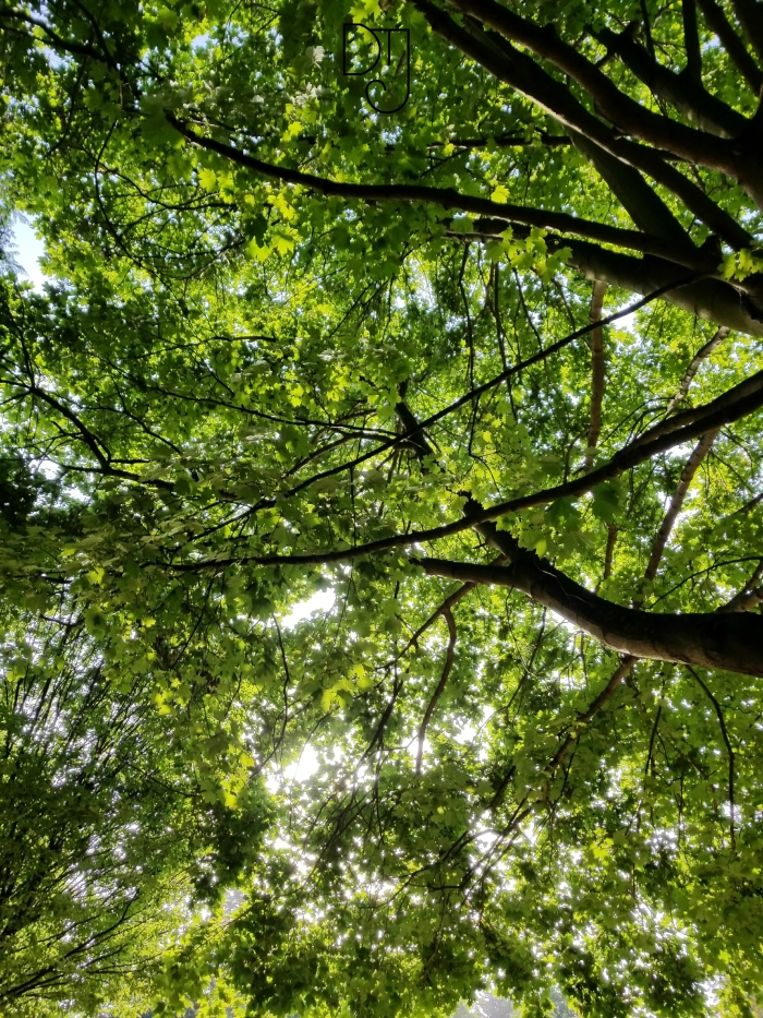 treetops-dtj